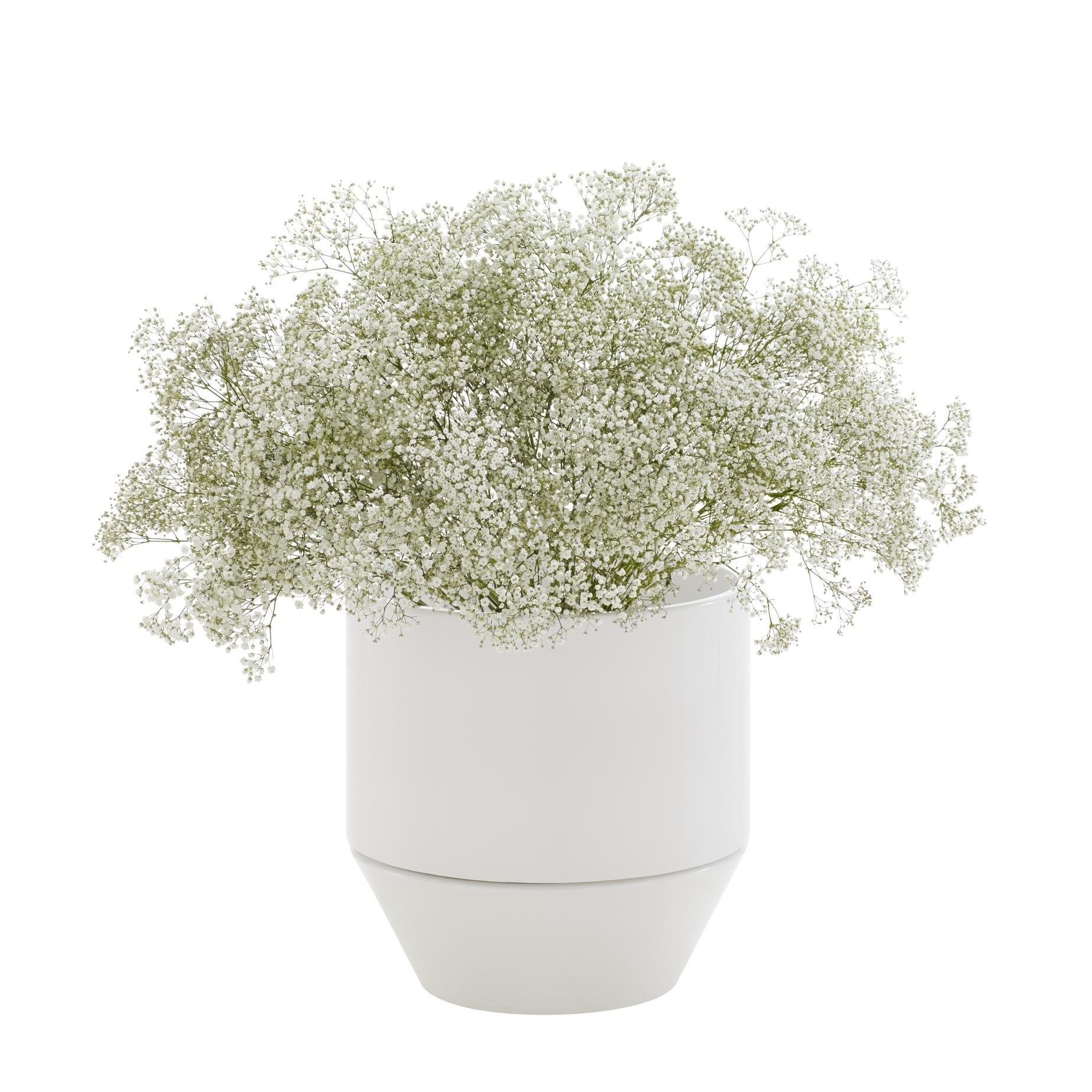 Ligne-Roset Flower-Pots-Soixante-3